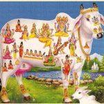 Panchagavyam en Kapothagavyam les 4 van 10