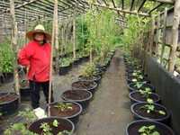 Dr. V.P. Mohana Kumari in EAC plant research centre.May 2010