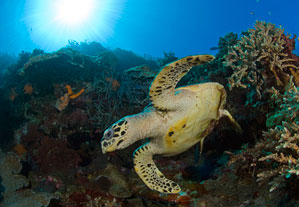 Adopt a Coral Reef