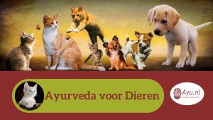 Ayurveda voor Dieren