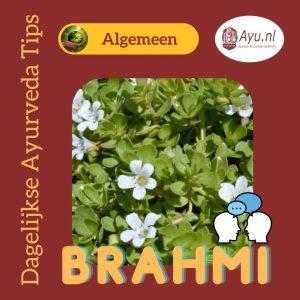 Brahmi en Ritalin