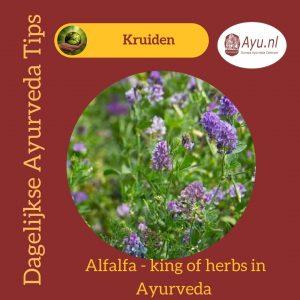 Alfalfa, de Koning der Kruiden in Ayurveda